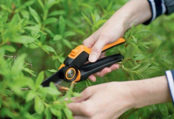 Beskjær grener og busker