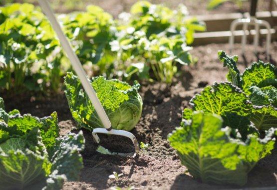Ta vare på blomsterbedd og grønsakshagen