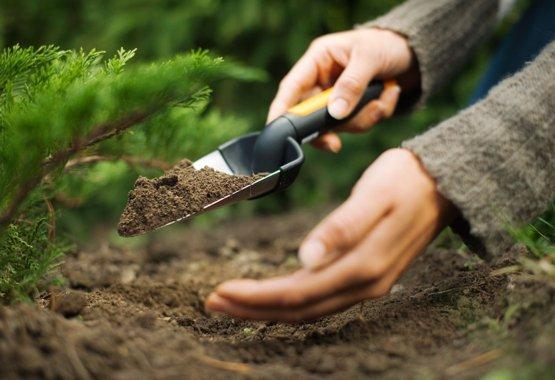 Gi de nye plantene dine den aller beste starten