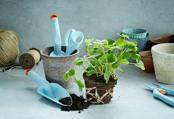 Gjør hagen din enda mer fargerik