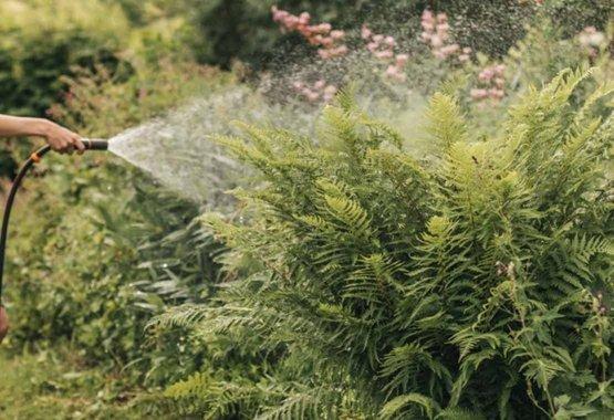Velg rette planter for ditt miljø